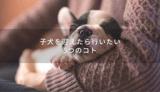 初めて愛犬を飼う方必見!子犬を迎えたら行いたい5つのコト